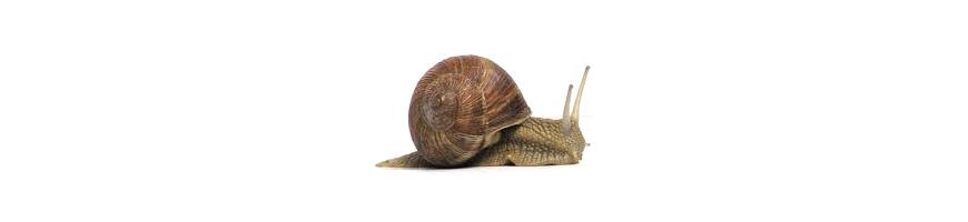 Anti Limace : Répulsif naturel, Piège pour Limaces et Escargots