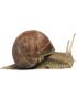 Limaces et Escargots