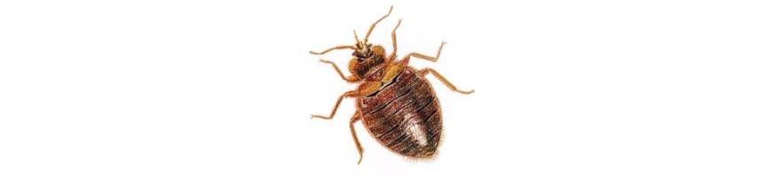 Traitement insecticide punaise de lit