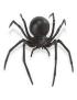 Anti Araignées
