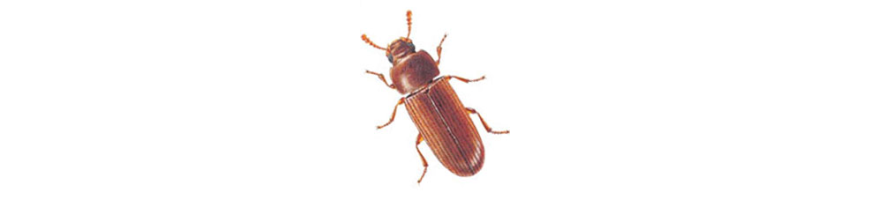 Autres Insecticides