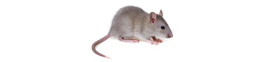 Anti Souris - Piège, Répulsif et Ultrason Anti-souris Efficaces
