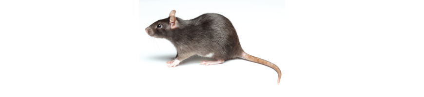 Anti-Rats et Surmulots