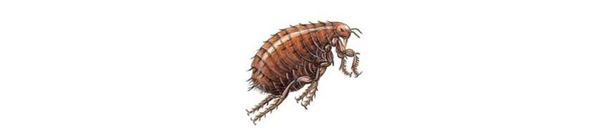Repulsif Insectes